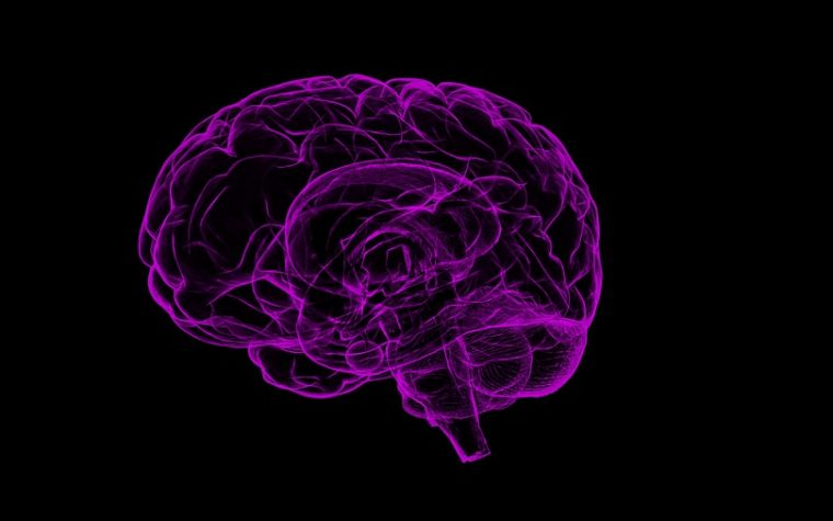 Brain changes from daily meditation